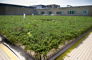 morris_inn_green_roof