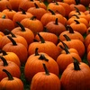 5 Tips and Tricks for a Greener Halloween