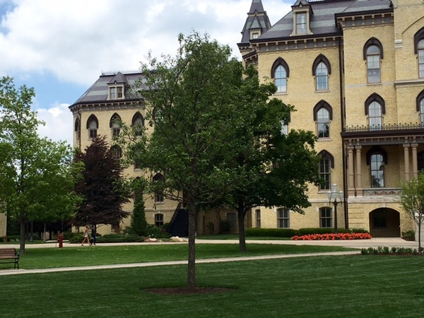 New main quad oaks chosen for appearance and resilience